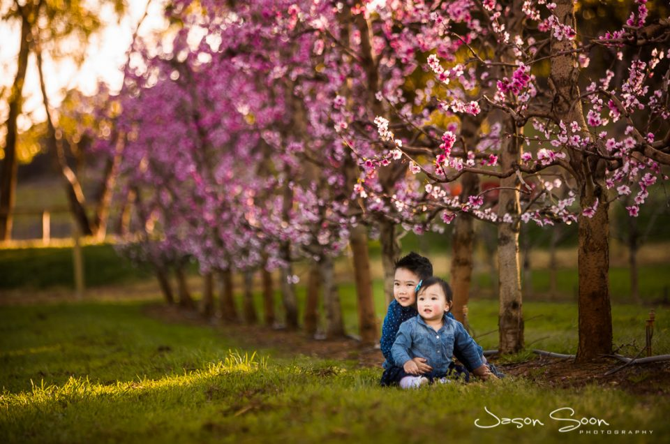 A Blossoming Family Photoshoot with Familiar Friends